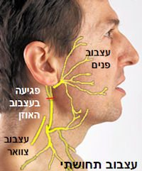 facesensoryinnervation-1